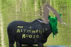 AsymMoose